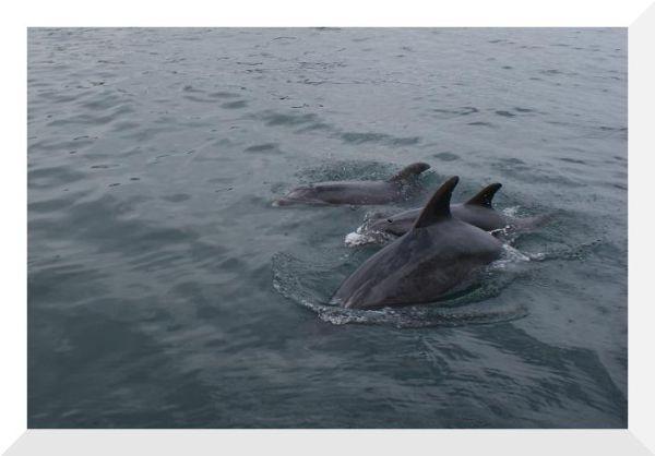 O passeio dos golfinhos (2)