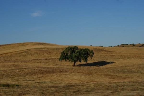 o campo alentejano