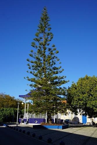 A árvore do jardim