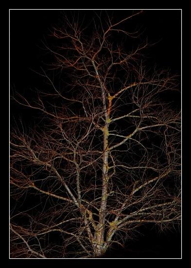 Árvore adormecida