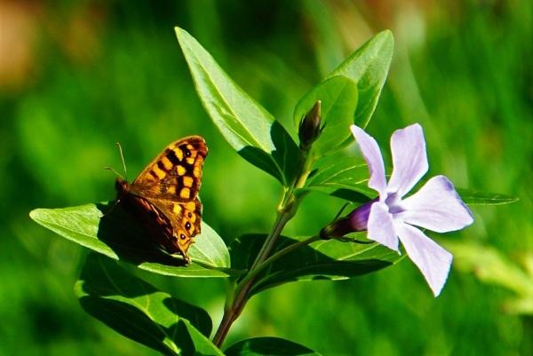 A borboleta e a flor