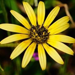 Uma simples flor
