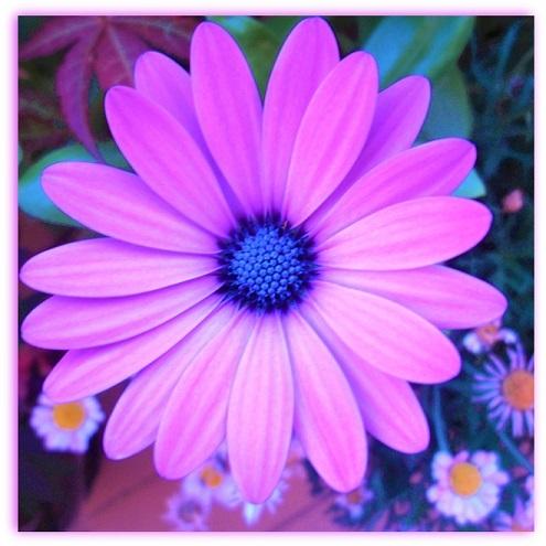 Flor (2)