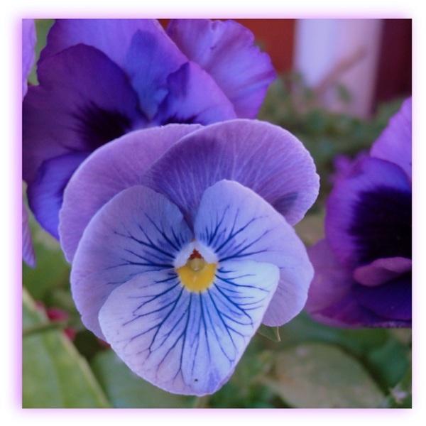 Flor (3)