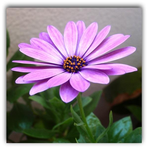 Flor (4)