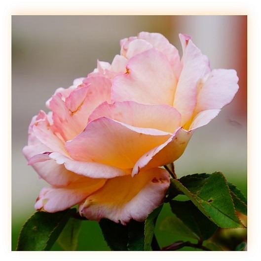 Flor (5)