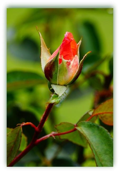 Flor (6)