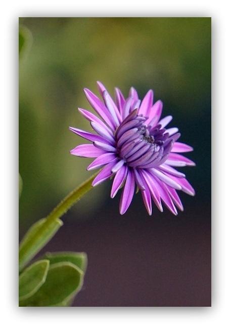 Flor (8)