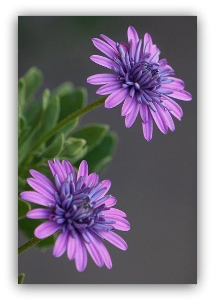 flores (9)