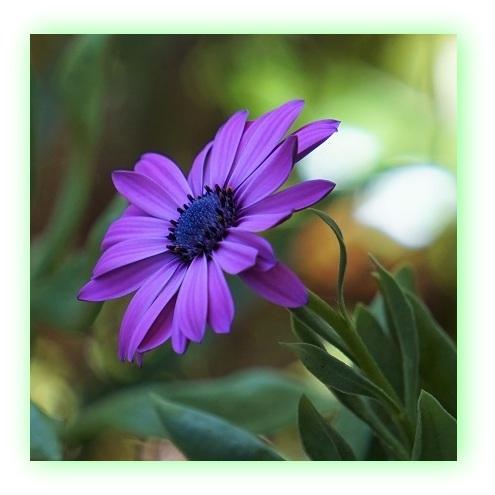 Flor (10)