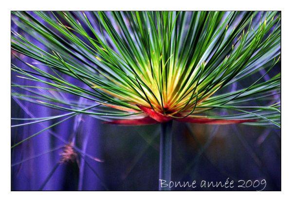 serres des jardins d'Auteuil