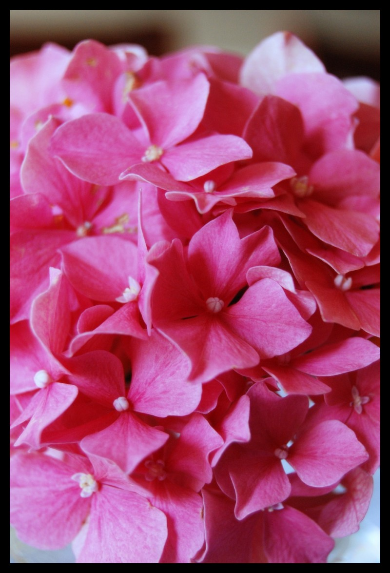 Pink flowers from our friend S.