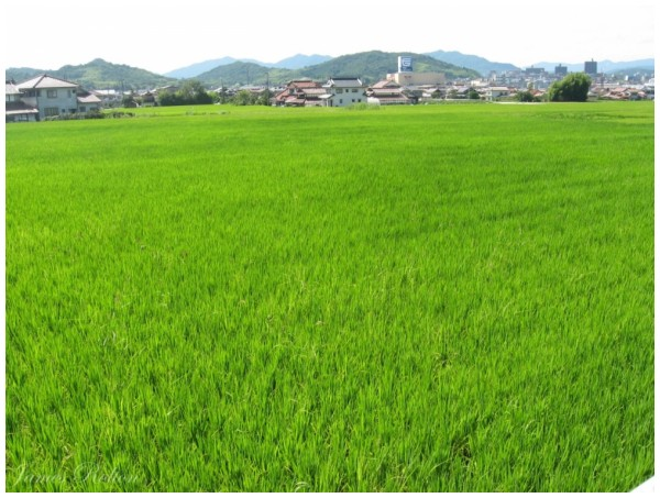 Residence in the Rice