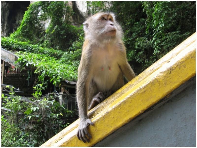 Mean Monkey