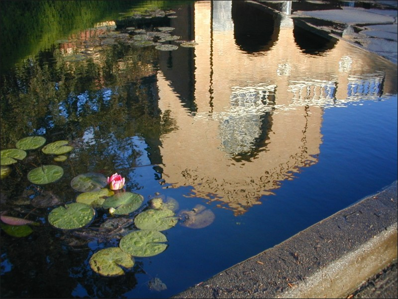 Lotus flower, Mt. Angel Abbey, OR. 09/2003.