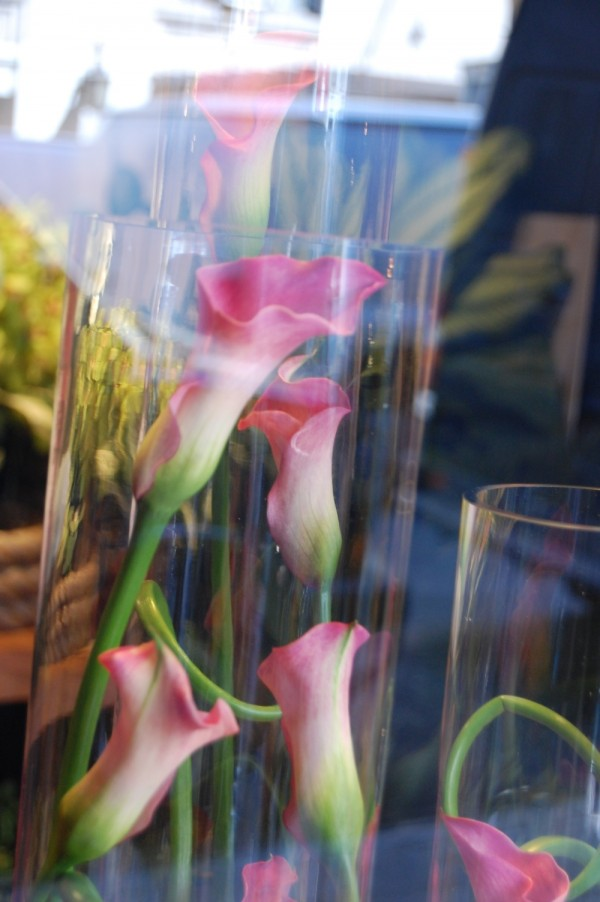 The Calla Lilies are in bloom in a window again...