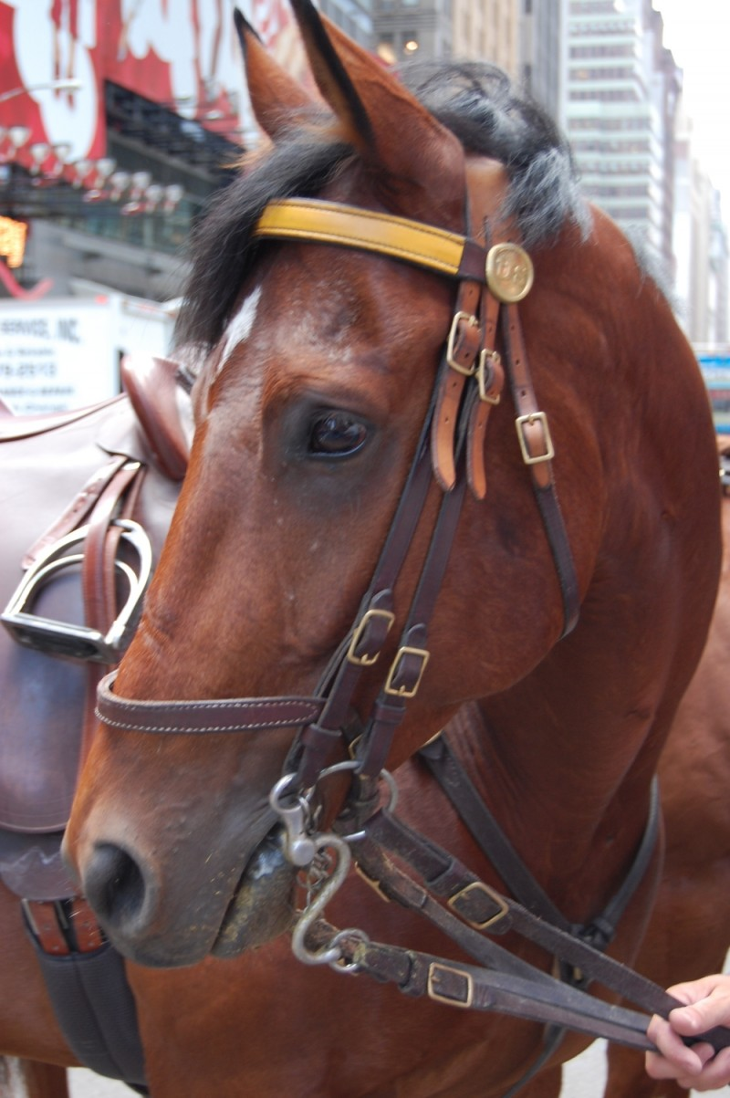 Close up of a police horse in Times Square.