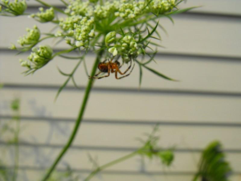 L'araignée, l'araignée... est un être bien....