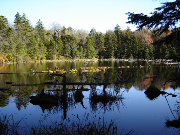 woodford state park