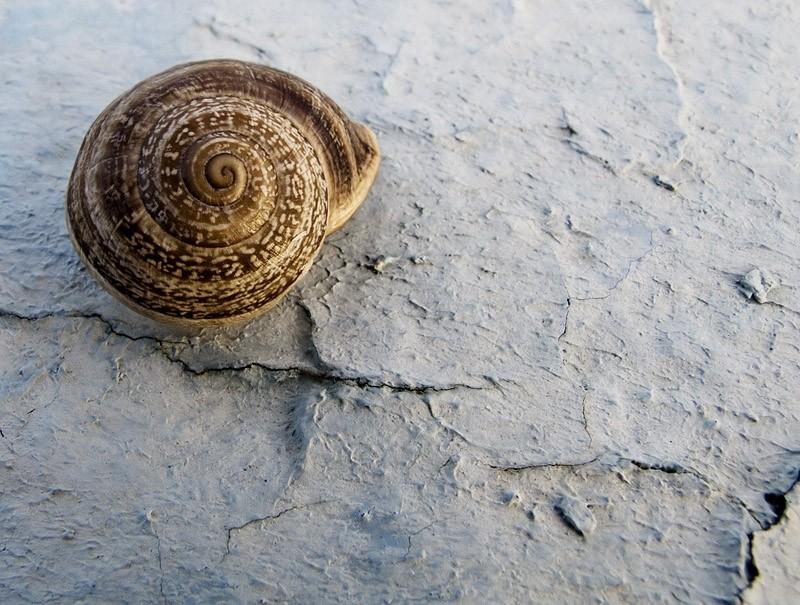 caracol, espiral