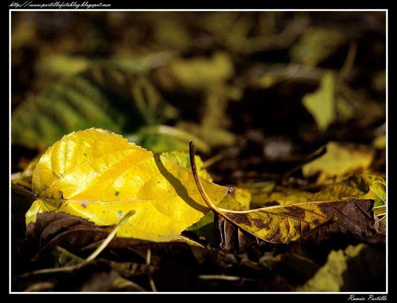 Autumn arrives...