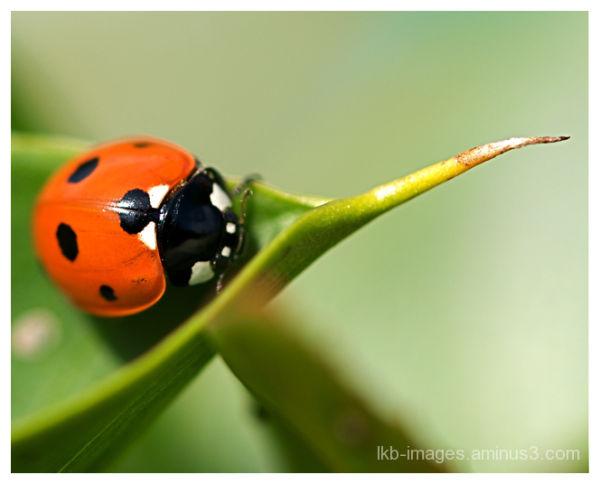 Ladybird flyaway Home