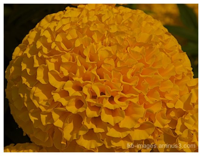 Bloom in Yellow