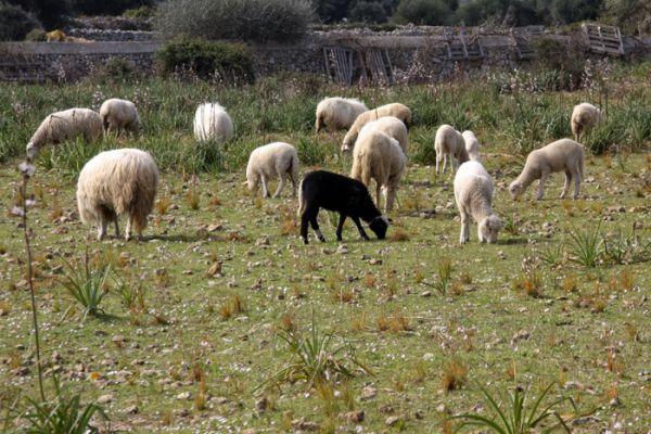 L'ovella negra de la família