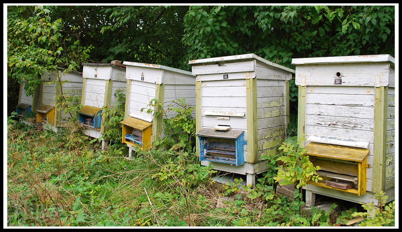 blue-yellow Swedish beehives