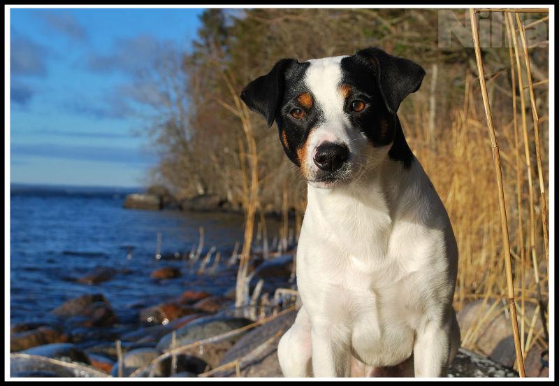 dog at the reed edge