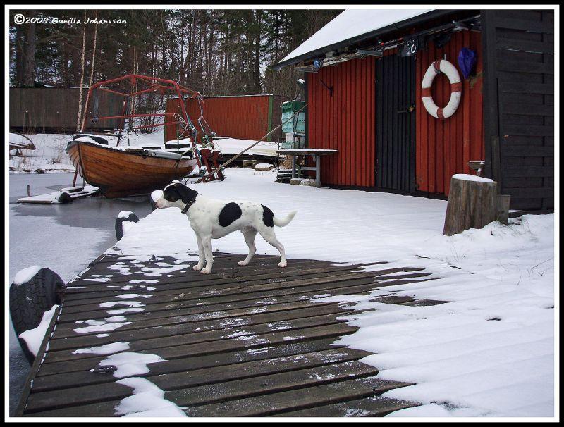 winter marina