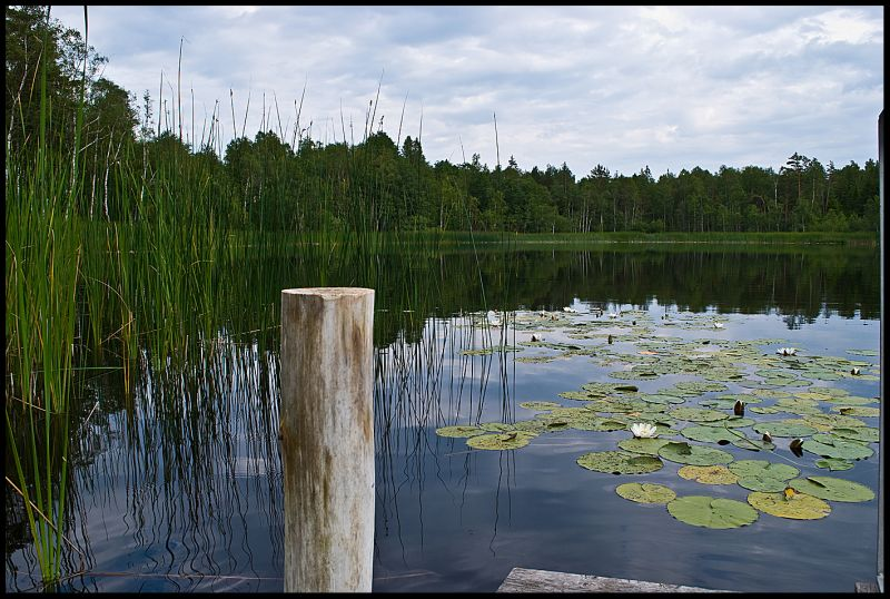 small Swedish forest lake