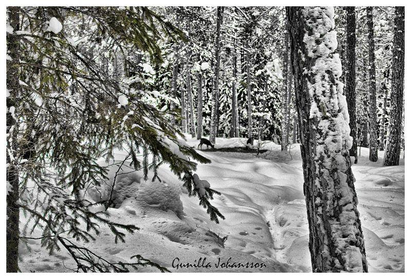 dear (deer) forest