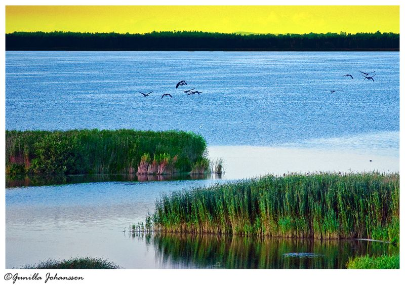 bird lake tåkern