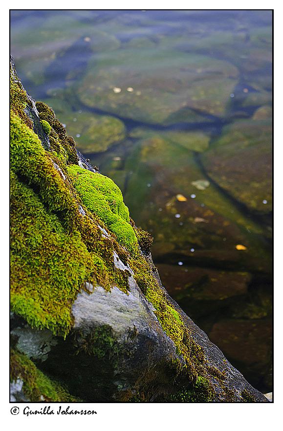 moss rock water