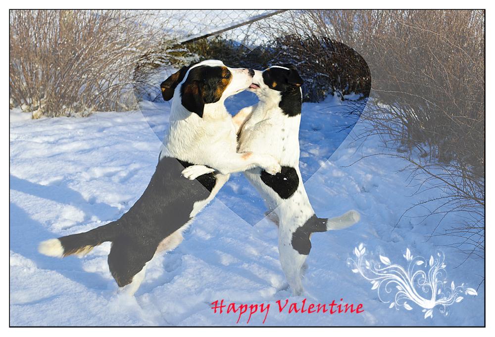 Happy ♥ Valentine