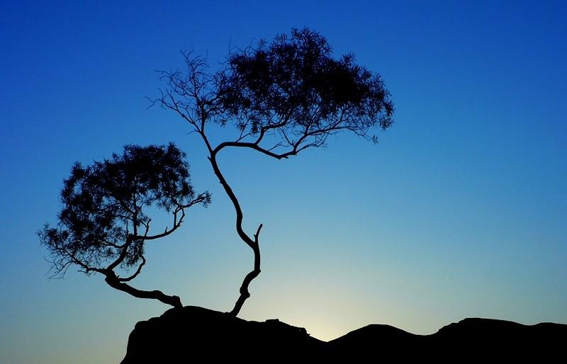 Tree-China