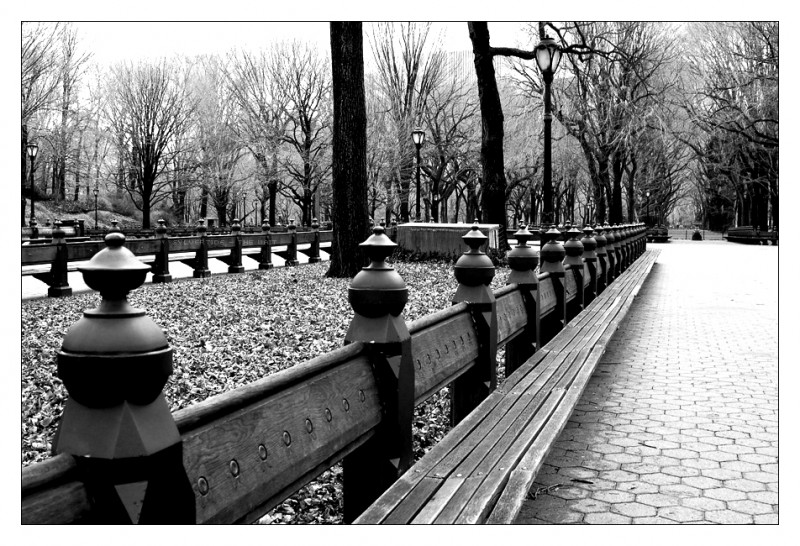 The Wait is taken at New York Central park