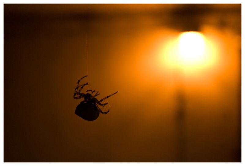 Miss Muffet's Spider