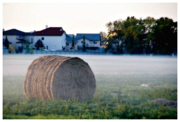 Hay Bails on the Henday