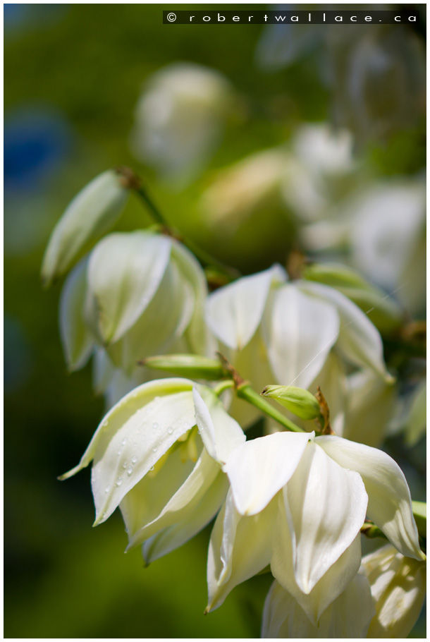 Naramata Flowers