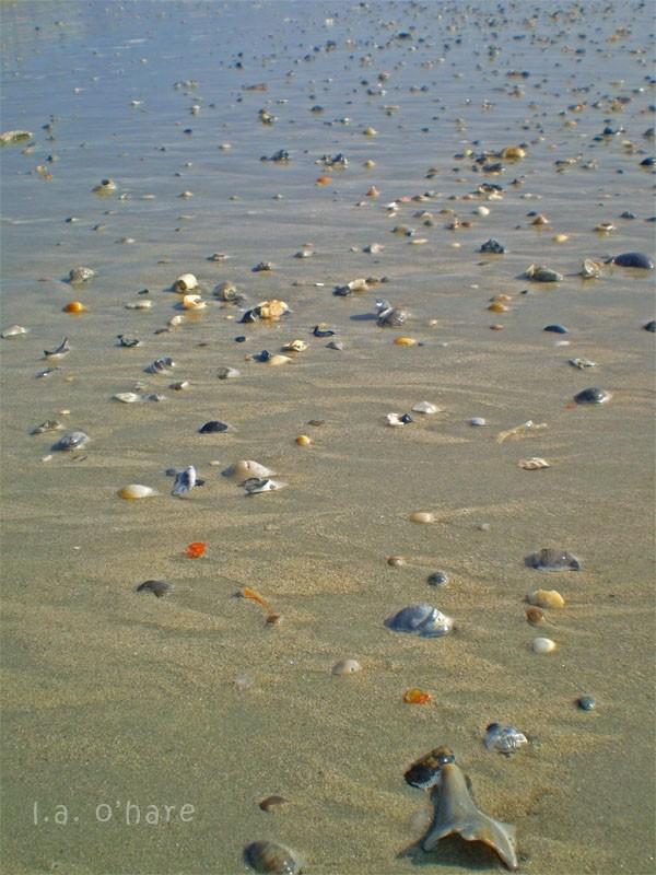 Mourning Shells