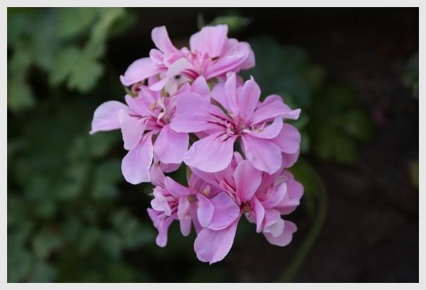 Flor, Flower...