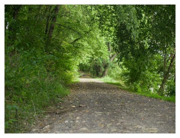 Juniata River Trail