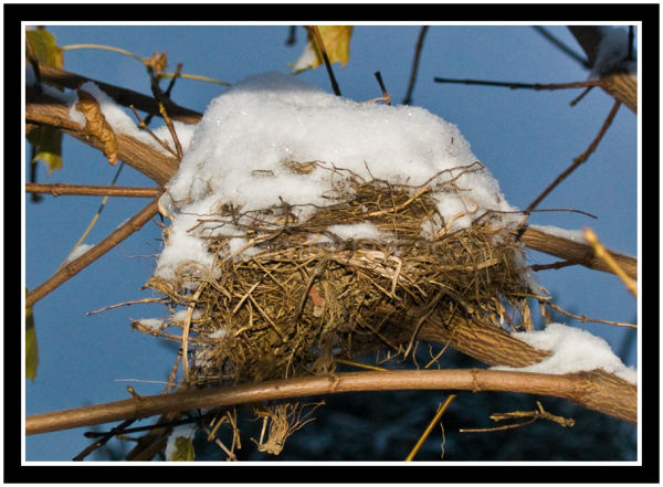 Birds nest in winter