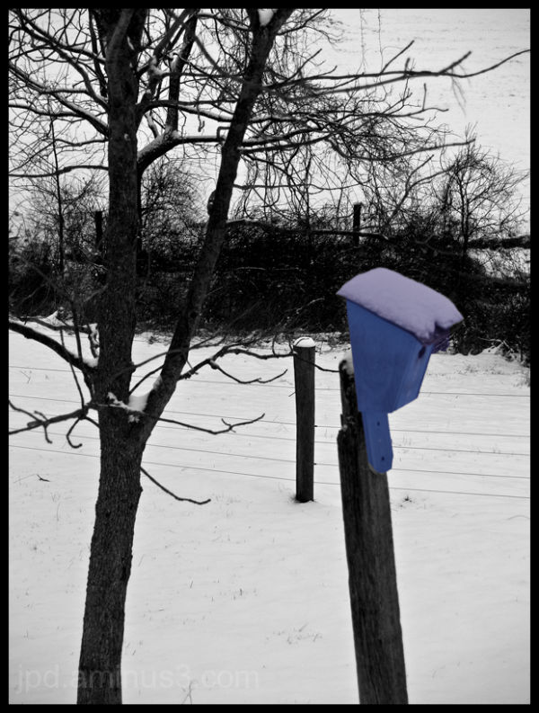 Bluebirds in a Black and White World