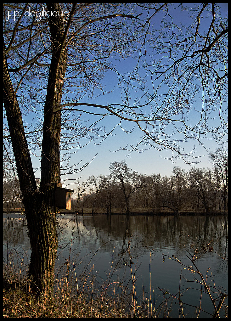 susquehanna river bluebird