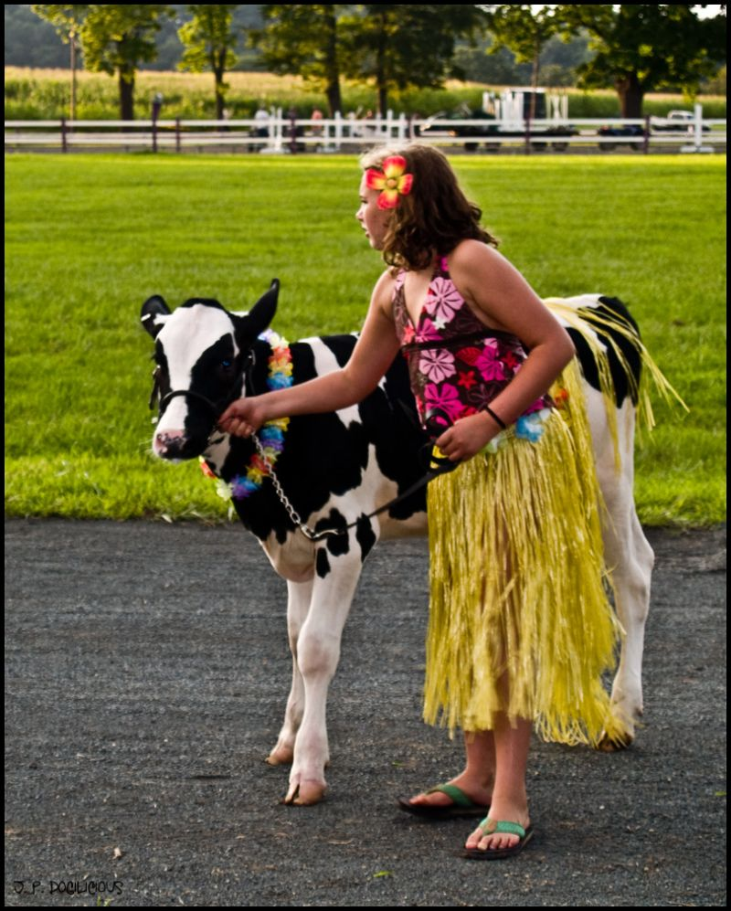 Hula Cow for Silly Tuesday