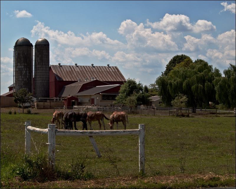 Lancaster Mules