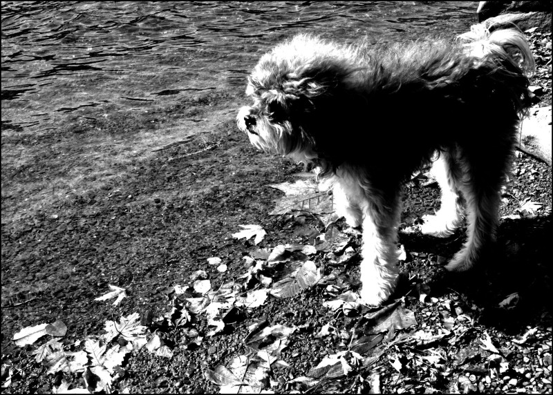 A dog by the river